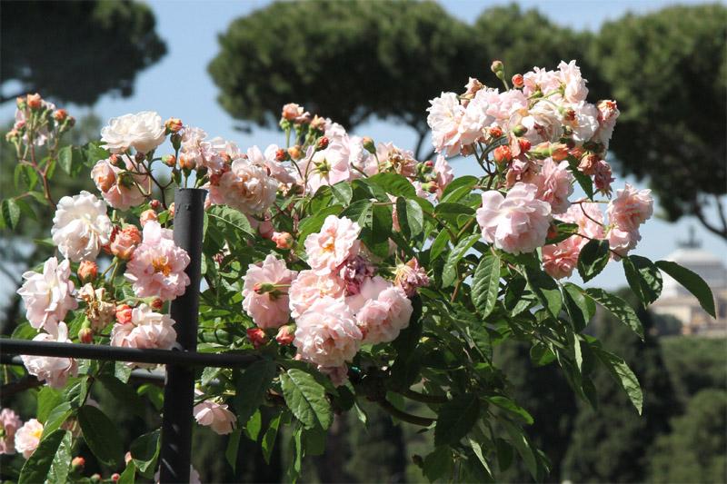 jardin-des-roses-rome2